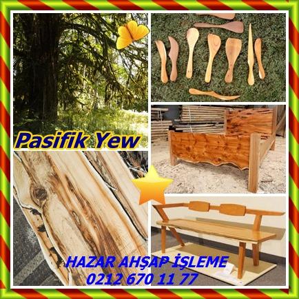 catsPasifik Yew 32