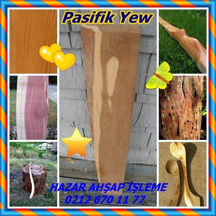 catsPasifik Yew 34