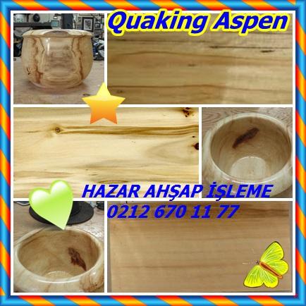 catsQuaking Aspen43