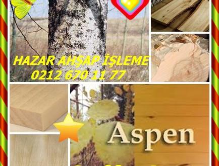 Quaking Aspen, (Populus tremuloides),álamo blanco,altın titrek kavak,álamo temblón