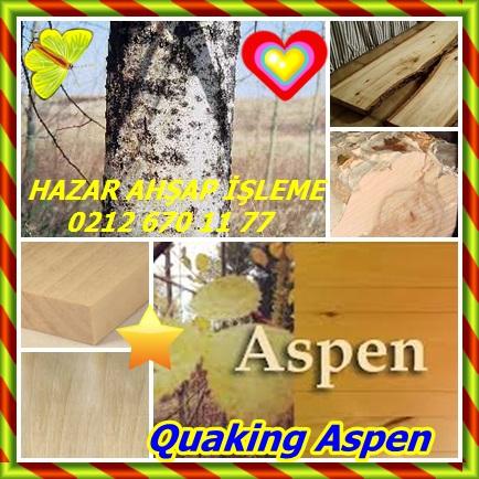 catsQuaking Aspen65