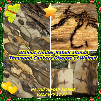 catsThousand Cankers Disease of Walnut