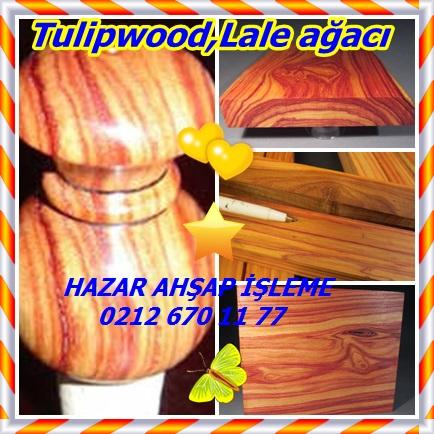 catsTulipwood,Lale ağacı11