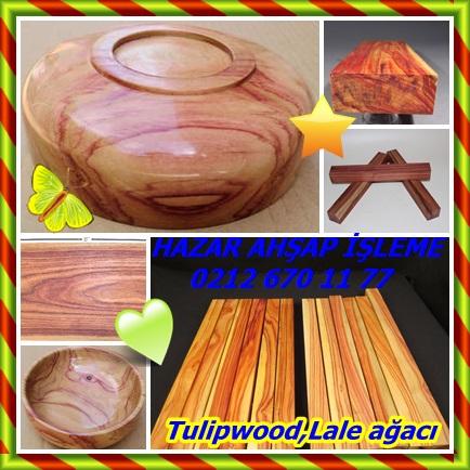 catsTulipwood,Lale ağacı22