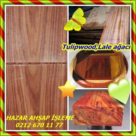 catsTulipwood,Lale ağacı33