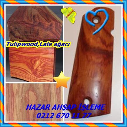 catsTulipwood,Lale ağacı444