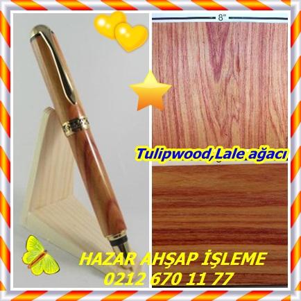 catsTulipwood,Lale ağacı5655
