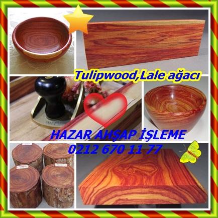 catsTulipwood,Lale ağacı666
