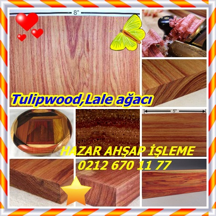 catsTulipwood,Lale ağacı88