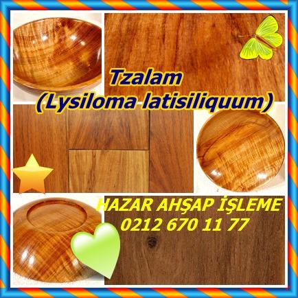 catsTzalam, (Lysiloma latisiliquum)