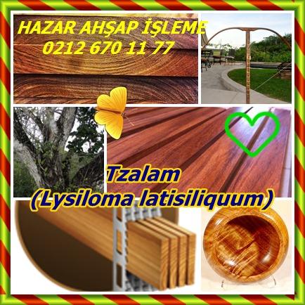 catsTzalam, (Lysiloma latisiliquum)125