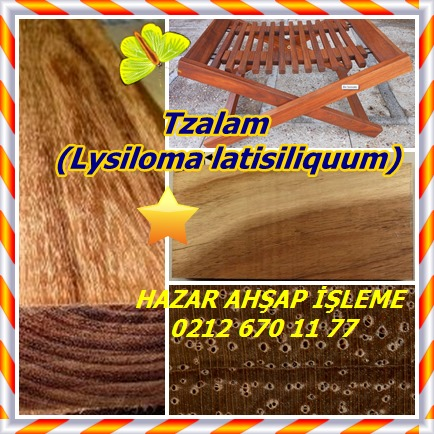 catsTzalam, (Lysiloma latisiliquum)254