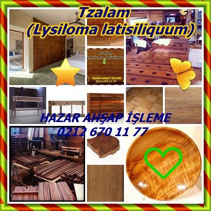 catsTzalam, (Lysiloma latisiliquum)4555
