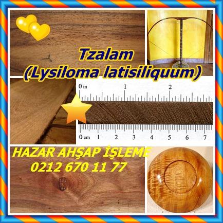 catsTzalam, (Lysiloma latisiliquum)6555