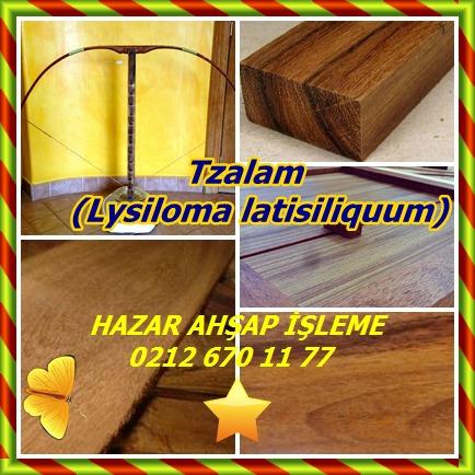 catsTzalam, (Lysiloma latisiliquum)75