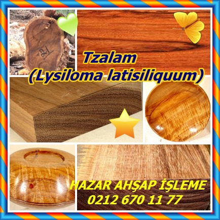 catsTzalam, (Lysiloma latisiliquum)789
