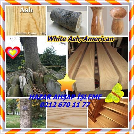 catsWhite Ash, American 455