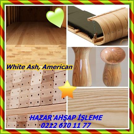 catsWhite Ash, American 658