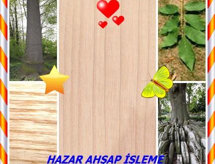 White Ash,American White Ash,(Fraxinus americana),Beyaz Kül, Amerikan Beyaz Kül,White Ash,American White Ash,Biltmore kül, Biltmore beyaz kül , baston kül