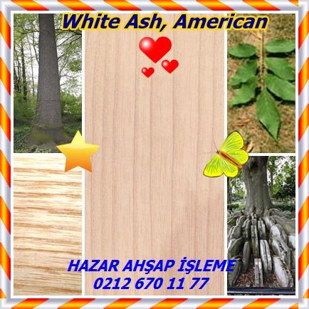 catsWhite Ash, American 758