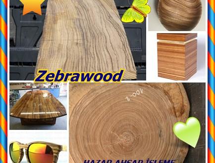 Zebrawood, Zebrano, (Microberlinia brazzavillensis),Afrika zebrawood, Allen ele, Kongonjuomupuu, Zingana,amouk, , izingana , enuk-enug ,