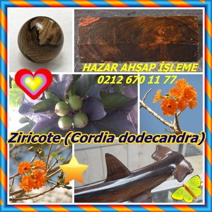 catsZiricote (Cordia dodecandra)33