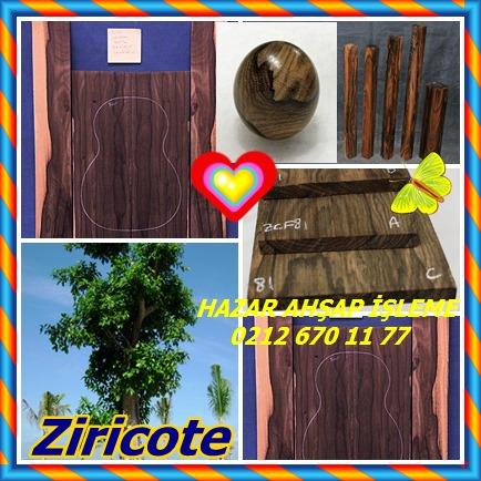 catsZiricote (Cordia dodecandra)47