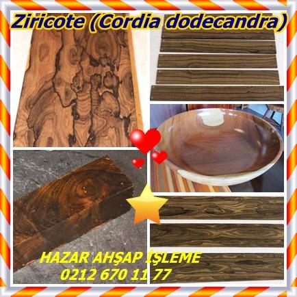 catsZiricote (Cordia dodecandra)655