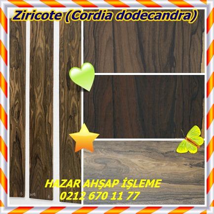 catsZiricote (Cordia dodecandra)78