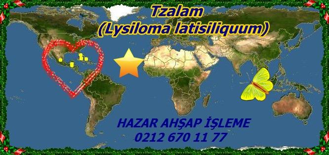 mTzalam, (Lysiloma latisiliquum)