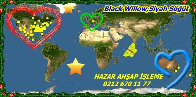mapBlack Willow,Siyah Söğüt