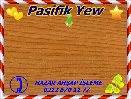 pacific-yew-Pasifik Yew