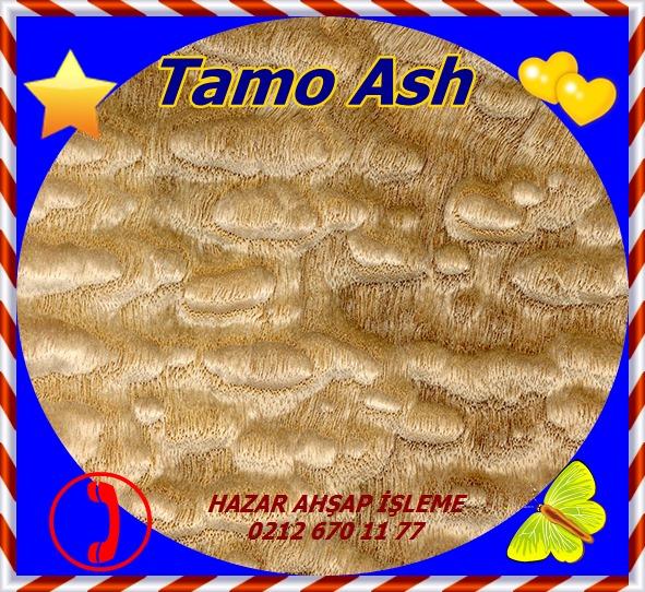 tamo-ash