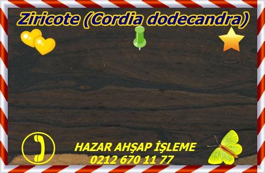 ziricoZiricote (Cordia dodecandra)