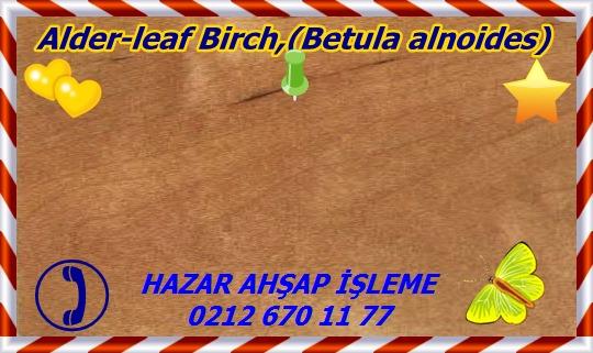 142398382469Alder-leaf Birch,(Betula alnoides)