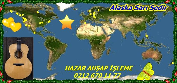 Alaska Sarı Sedir 343