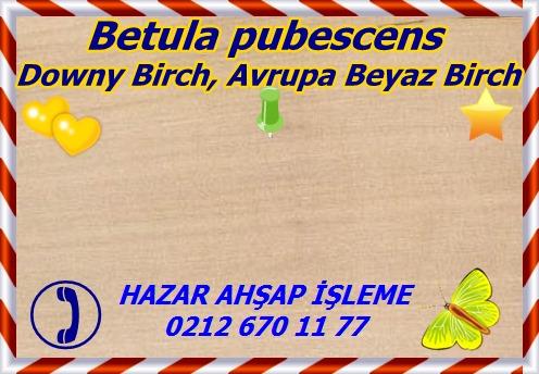 BetulapuDowny Birch, Avrupa Beyaz Birch