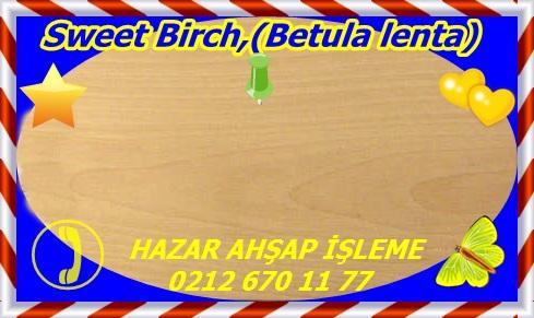 birch, swSweet Birch,(Betula lenta)