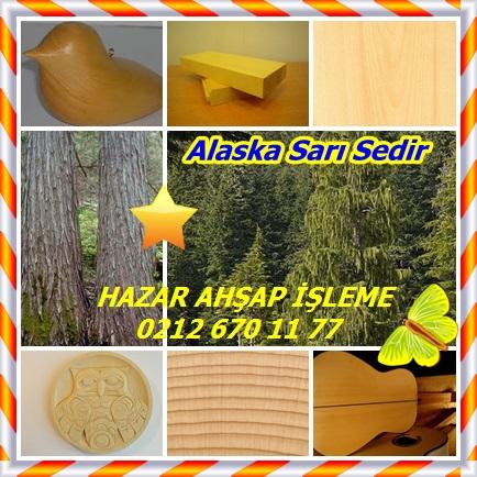 catsAlaska Sarı Sedir 33