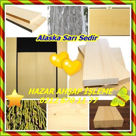 catsAlaska Sarı Sedir 544