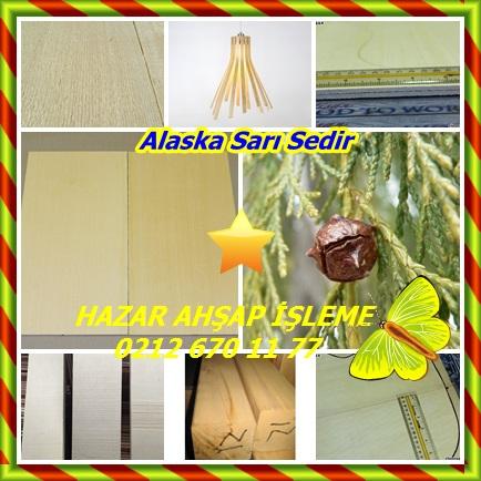 catsAlaska Sarı Sedir 56543