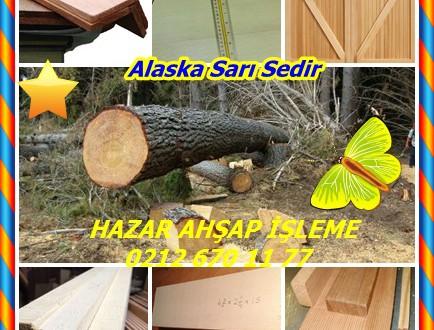 Alaskan Yellow Cedar, (Cupressus nootkatensis),(Chamaecyparis nootkatensis),Alaska Sarı Sedir