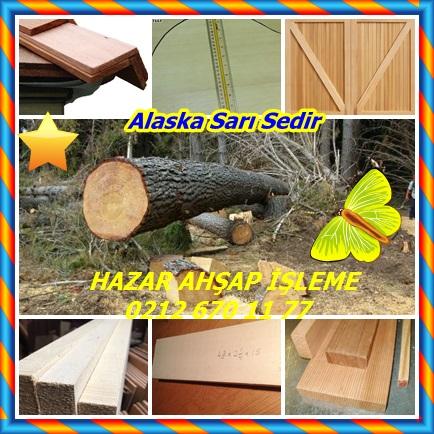 catsAlaska Sarı Sedir 5656