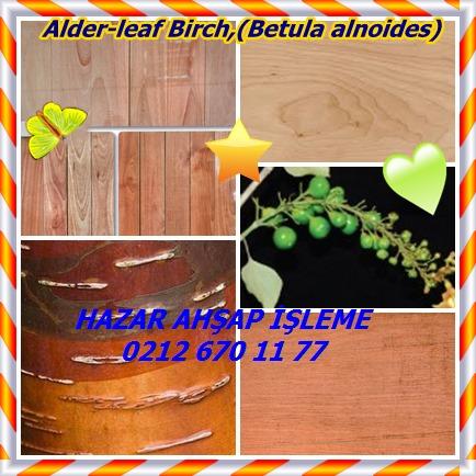 catsAlder-leaf Birch,(Betula alnoides)78