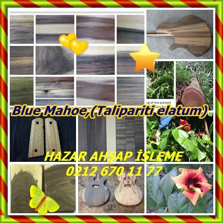 catsBlue Mahoe,(Talipariti elatum)78