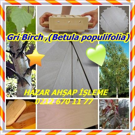 catsGri Birch ,(Betula populifolia)