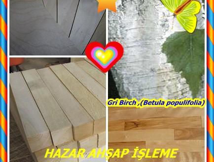 Gri Birch ,(Betula populifolia),Beyaz huş, Aspen-yapraklı huş,Old Field Birch