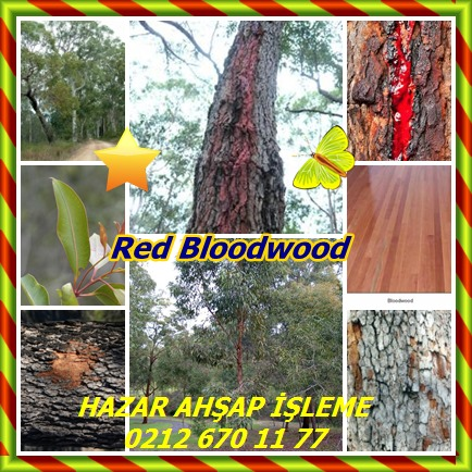 catsRed Bloodwood22