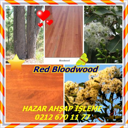 catsRed Bloodwood54