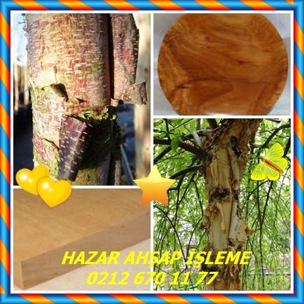 catsRiver Birch ,Nehir Birch,(Betula nigra)456